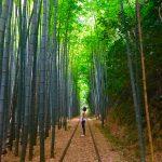 倉吉の嵐山はココ!緑広がる竹林の道