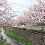 春は満開の桜のもとで♡4月のノルディックウォーク教室